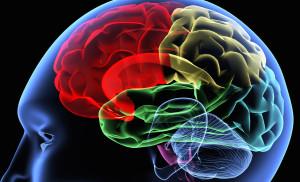 Scanning d'un cerveau humain par rayon X